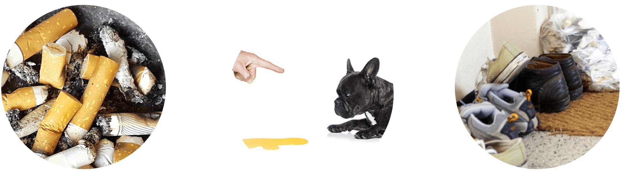 Ozongenerator gegen Gestank Kleidung Hundehaare Tierhaare