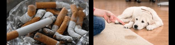 Geruchsneutralisierung Geruchsneutralisierer